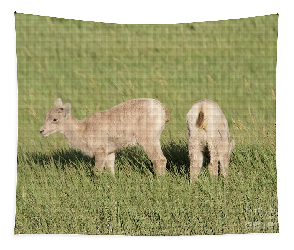 Big Horn Sheep Tapestry featuring the photograph Two Ewes In The Badlands by Jeff Swan