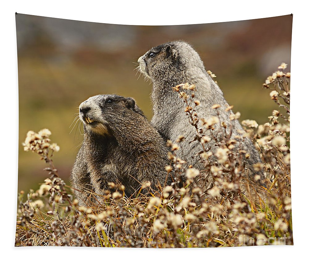 Adorable Tapestry featuring the photograph Two Marmots by Marv Vandehey