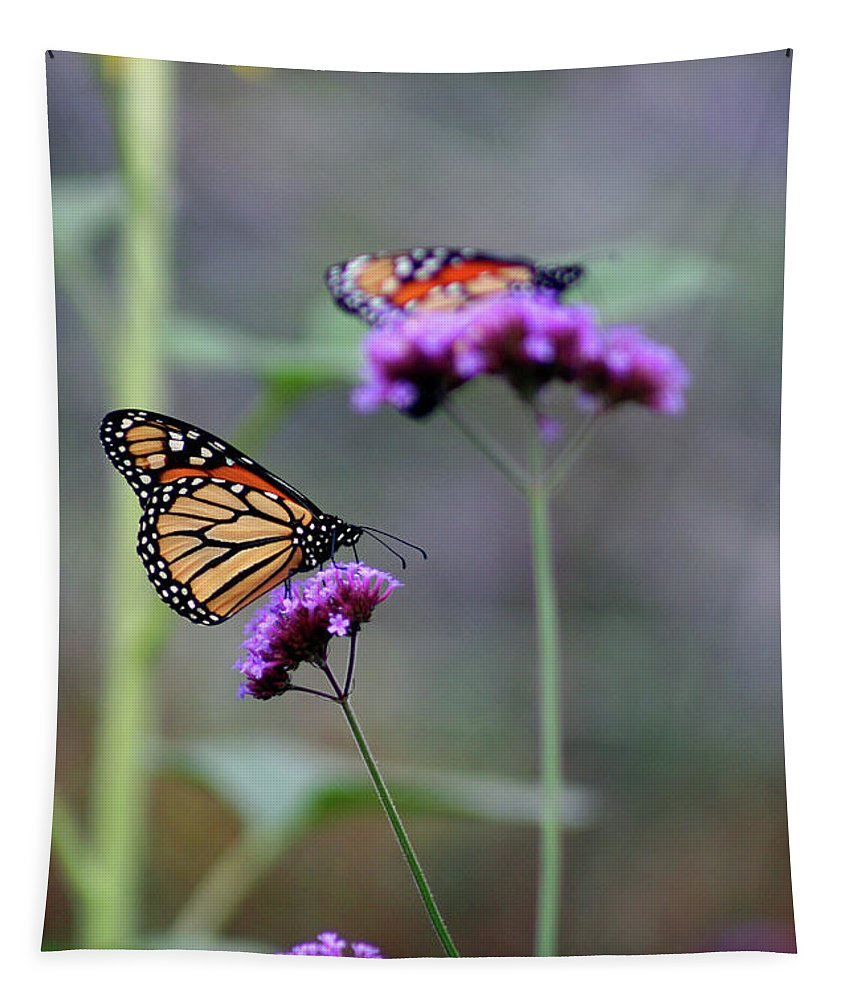 Monarch Tapestry featuring the photograph Two Monarchs On Verbena by Karen Adams