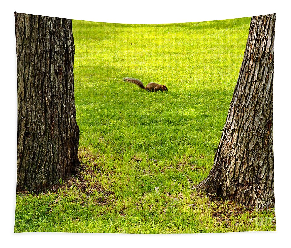 Squirrel Tapestry featuring the photograph Two Trees And A Squirrel by Gary Richards