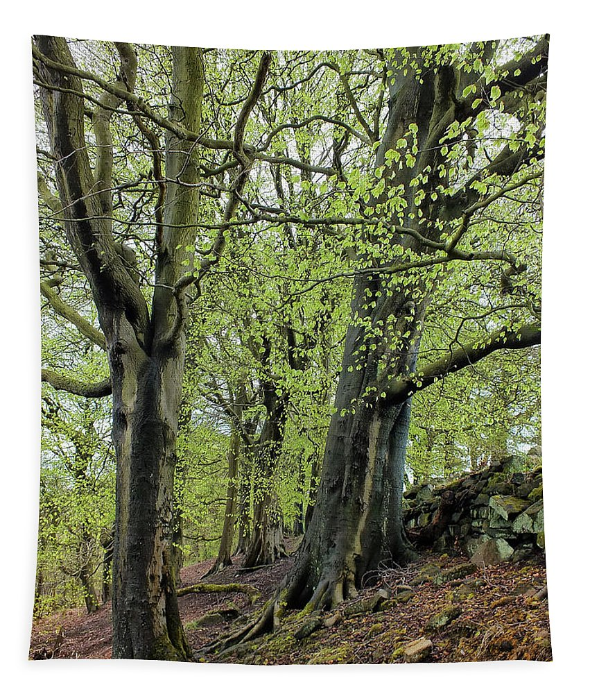 Spring Woods Tapestry featuring the photograph Two Trees In Springtime by Philip Openshaw