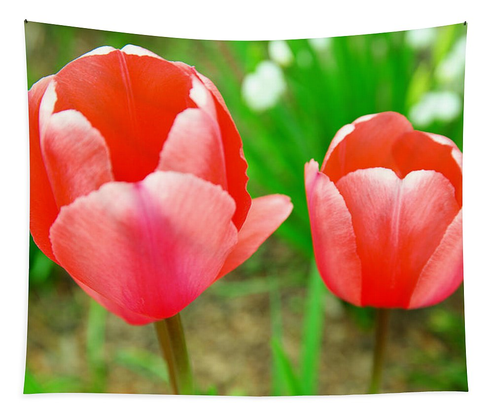 Flowers Tapestry featuring the photograph Two Tulips In Bloom by Jeff Swan