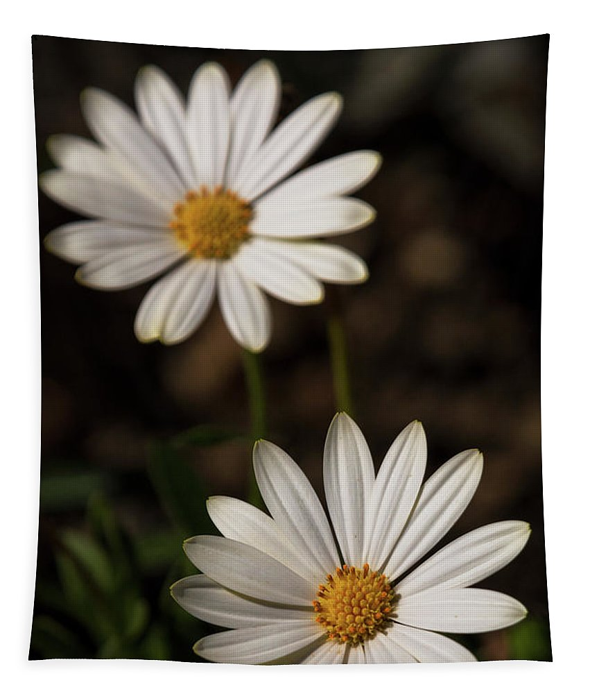 White Daisies Tapestry featuring the photograph Two White Daisies by Saija Lehtonen