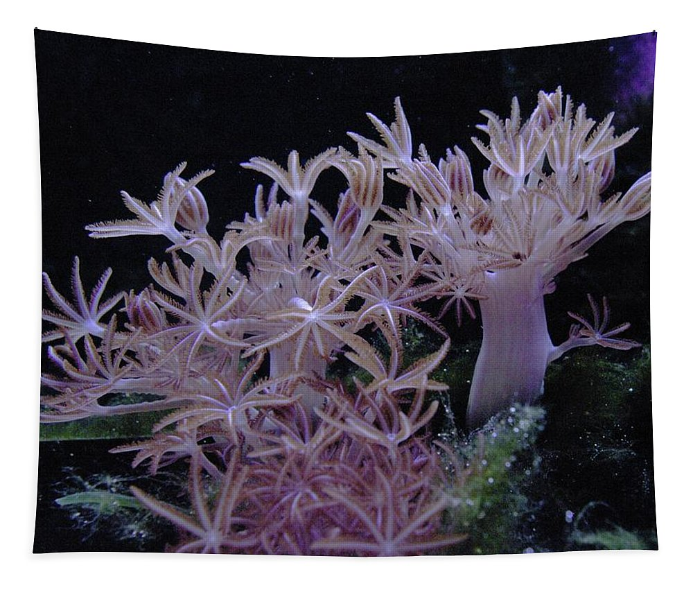Sea Plant Life Tapestry featuring the photograph Under Water by Jeff Swan