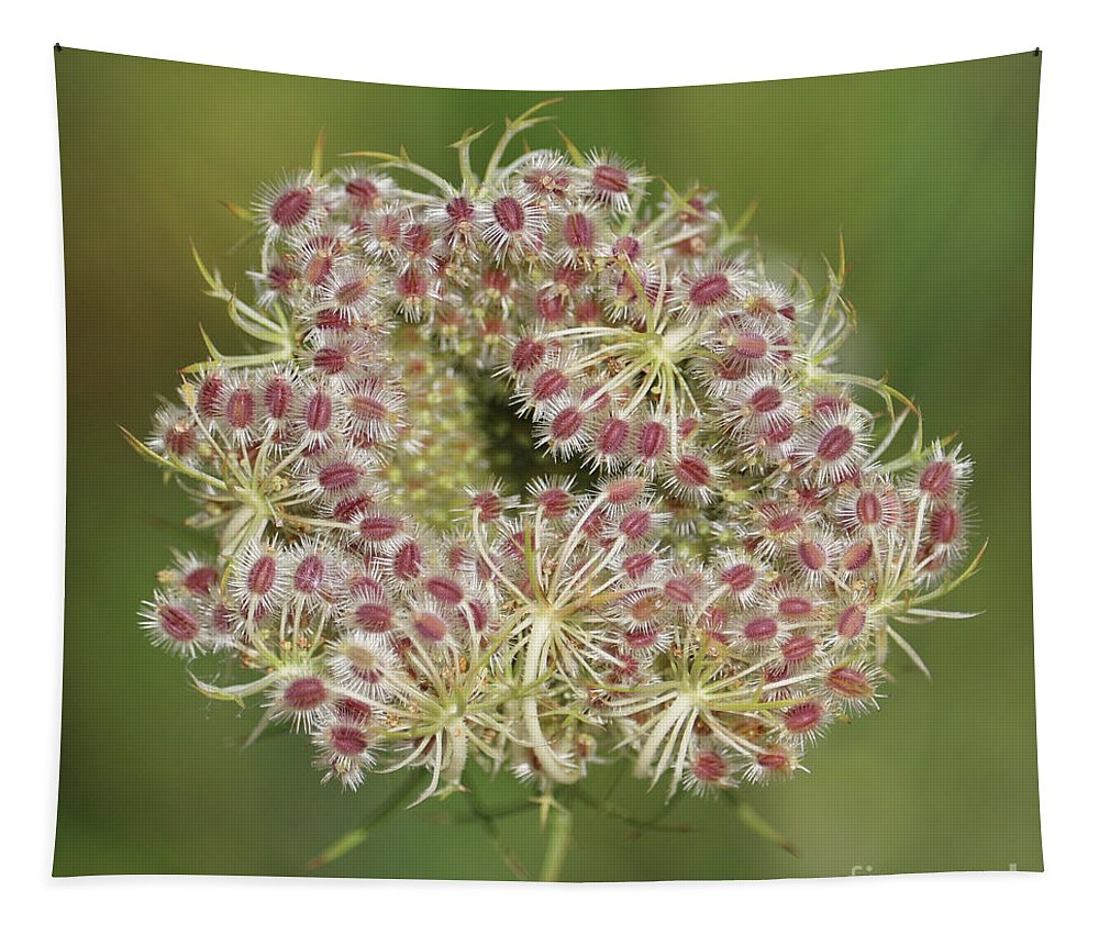Cow Parsnip Tapestry featuring the photograph Unfurling Nature Macro Square by Carol Groenen