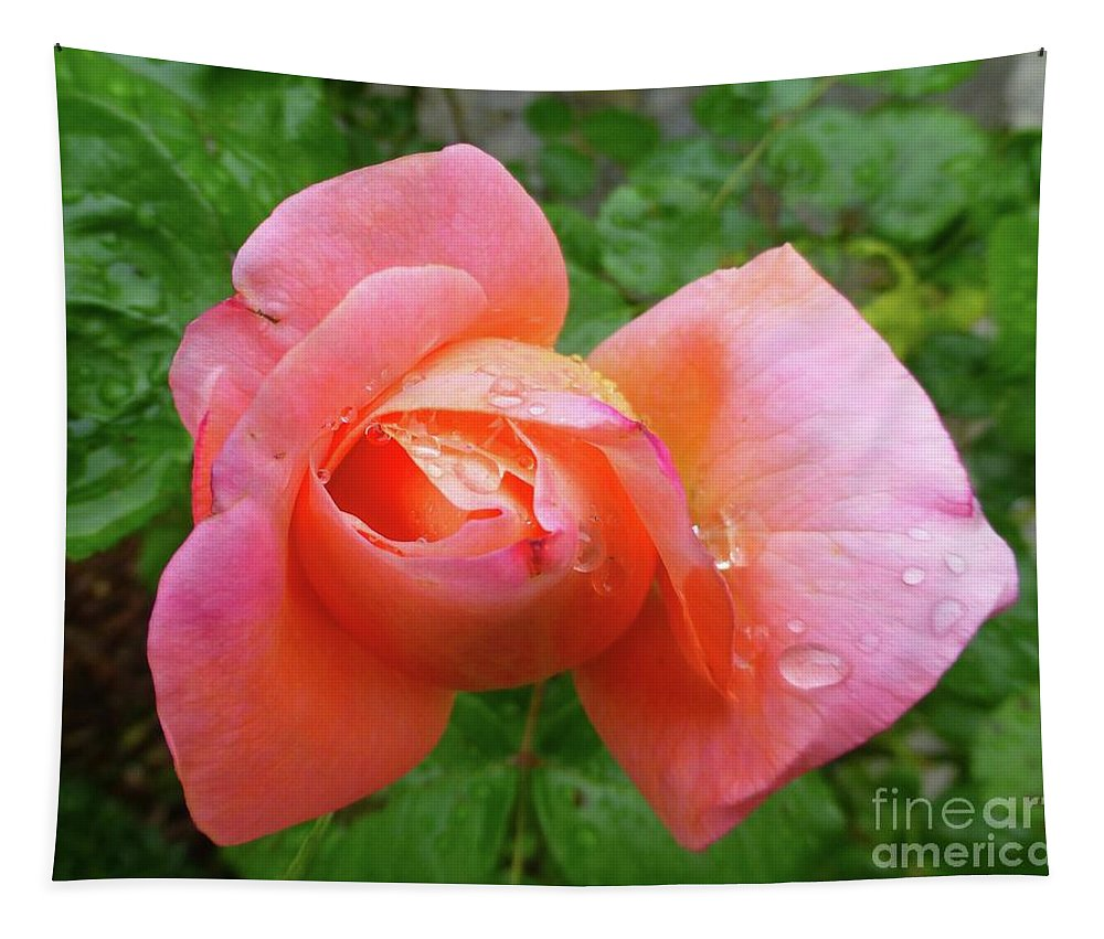 Rose Tapestry featuring the photograph Uniquely Unfolding by Barbie Corbett-Newmin