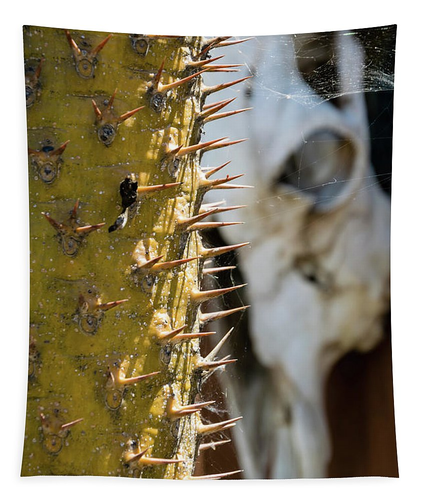 Cactus Spines Tapestry featuring the photograph Death And Taxes by Robert VanDerWal