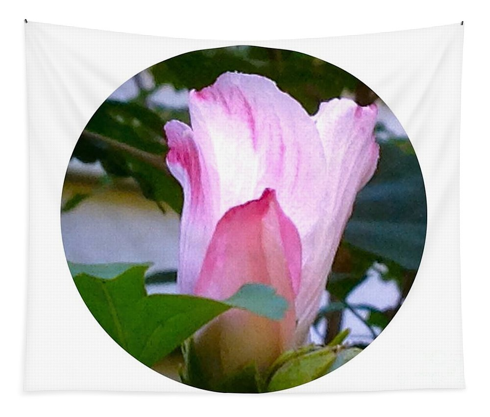 Flower Tapestry featuring the photograph Variegated Hibiscus Flower In Circle by Debra Lynch