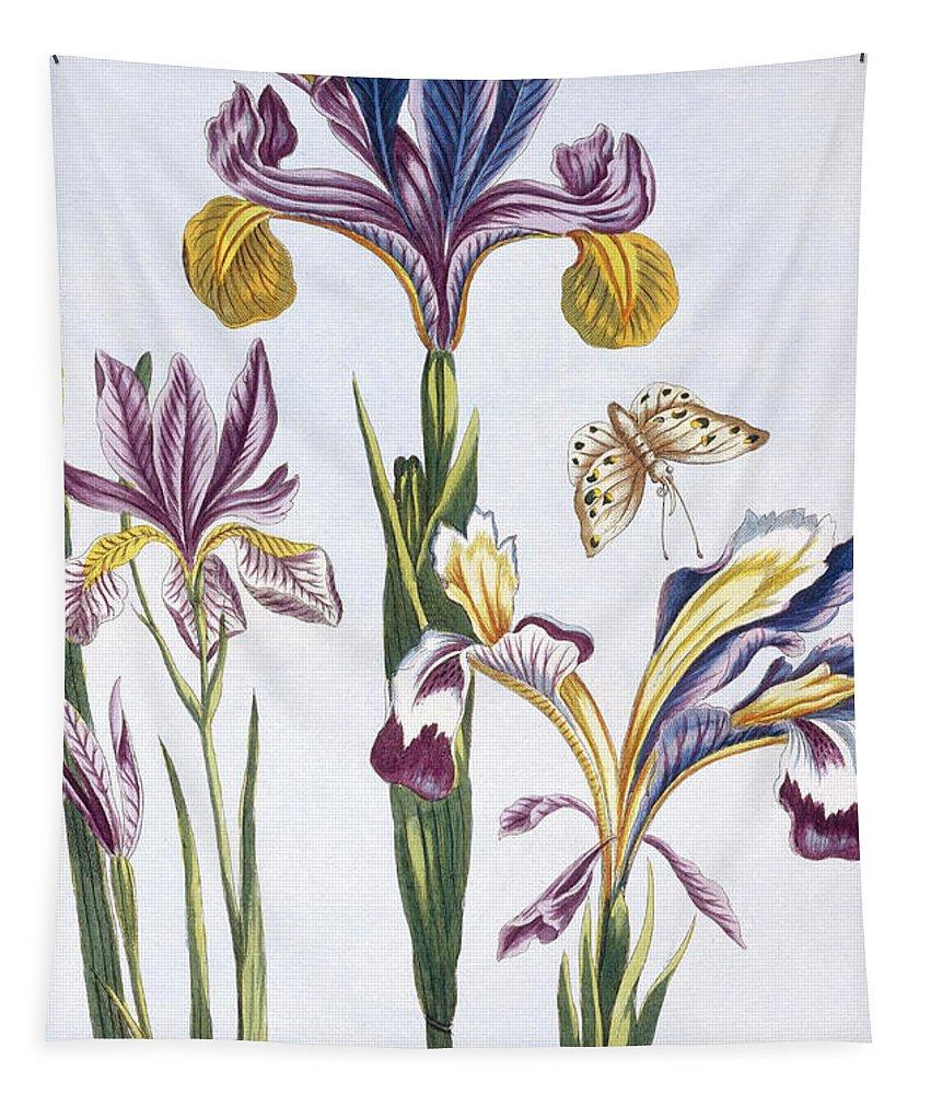 Iris Tapestry featuring the painting Variegated Iris by Pierre-Joseph Buchoz