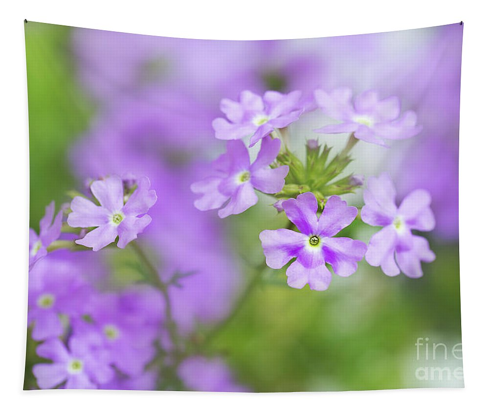 Verbena Tapestry featuring the photograph Verbena by Delphimages Photo Creations