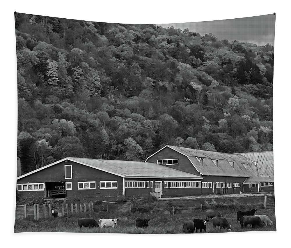 Vermont Tapestry featuring the photograph Vermont Farm With Cows Autumn Fall Black And White by Toby McGuire