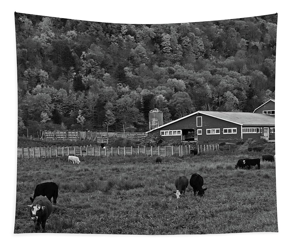 Vermont Tapestry featuring the photograph Vermont Farm With Cows Black And White by Toby McGuire