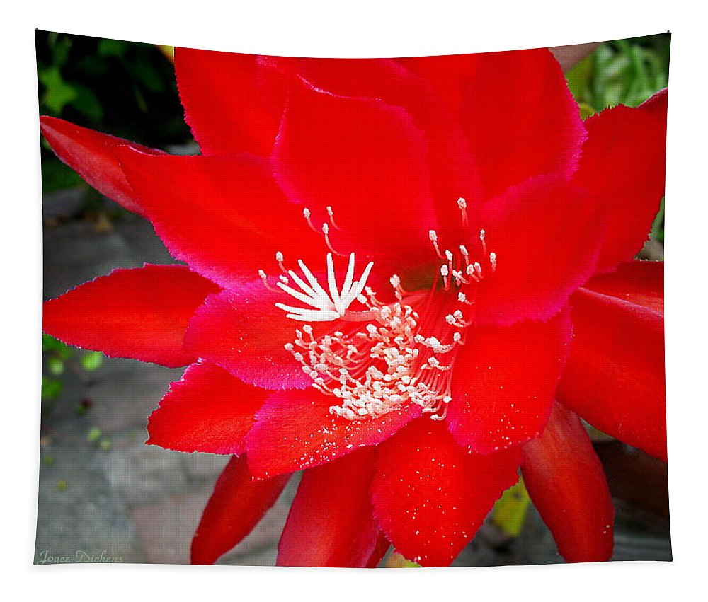 Cacti Tapestry featuring the photograph Vibrant Cacti by Joyce Dickens