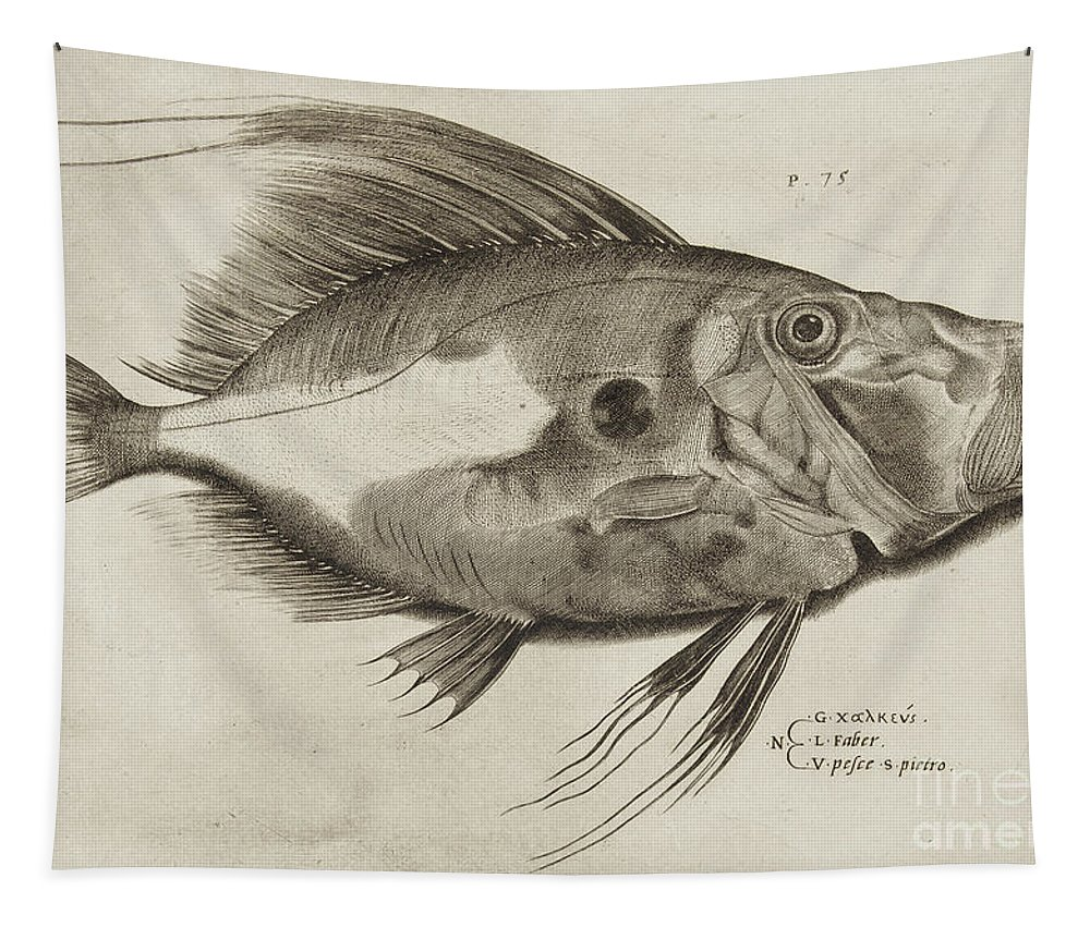 Fish Tapestry featuring the drawing Vintage Fish Print by Antonio Lafreri