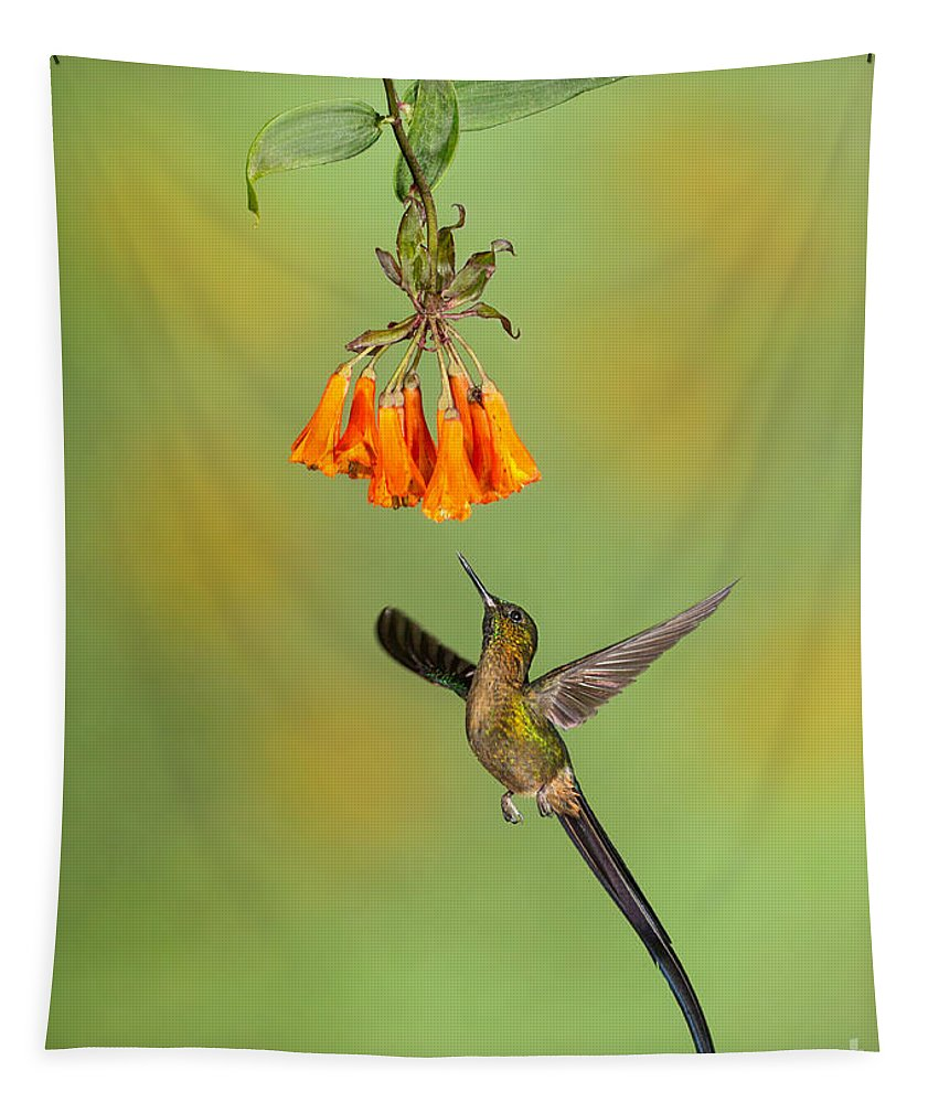 Andies Tapestry featuring the photograph Violet-tailed Sylph Hummingbird by Jerry Fornarotto