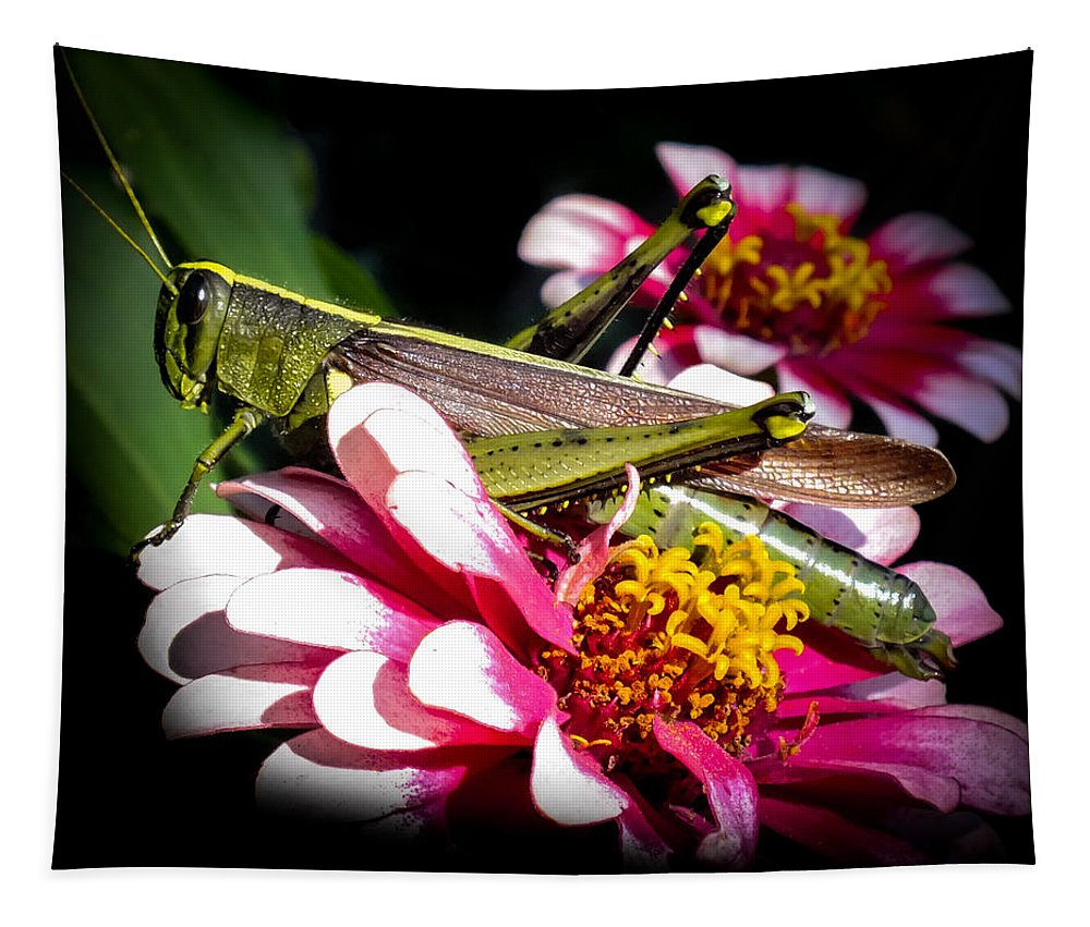 Grasshoppers Tapestry featuring the photograph Visiting A Zinnia by Karen Wiles