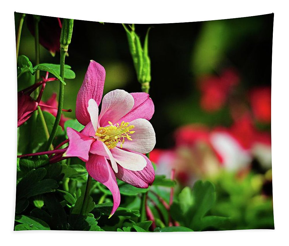 Wildflowers Tapestry featuring the photograph Vivid Pink Columbine by Lynn Bauer