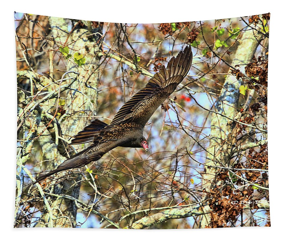 Vulture Tapestry featuring the photograph Vulture Glide by Deborah Benoit