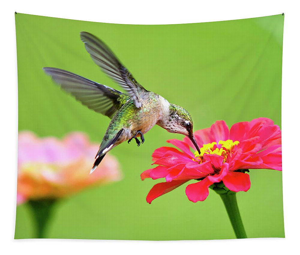 Hummingbird Tapestry featuring the photograph Waiting In The Wings by Christina Rollo