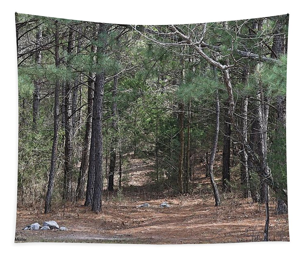 Pine Trees Tapestry featuring the photograph Walking In The Pine Forest by Bobbie Moller