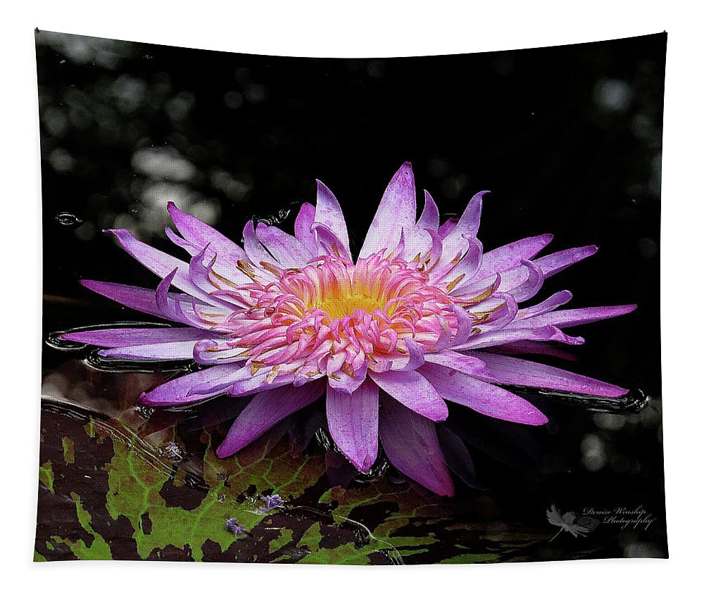 Water Lily Tapestry featuring the photograph Water Lily 1 by Denise Winship