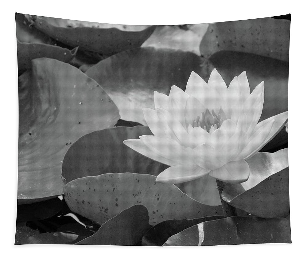 Water Lily Tapestry featuring the photograph Water Lily - Burnin' Love 13 - Bw by Pamela Critchlow