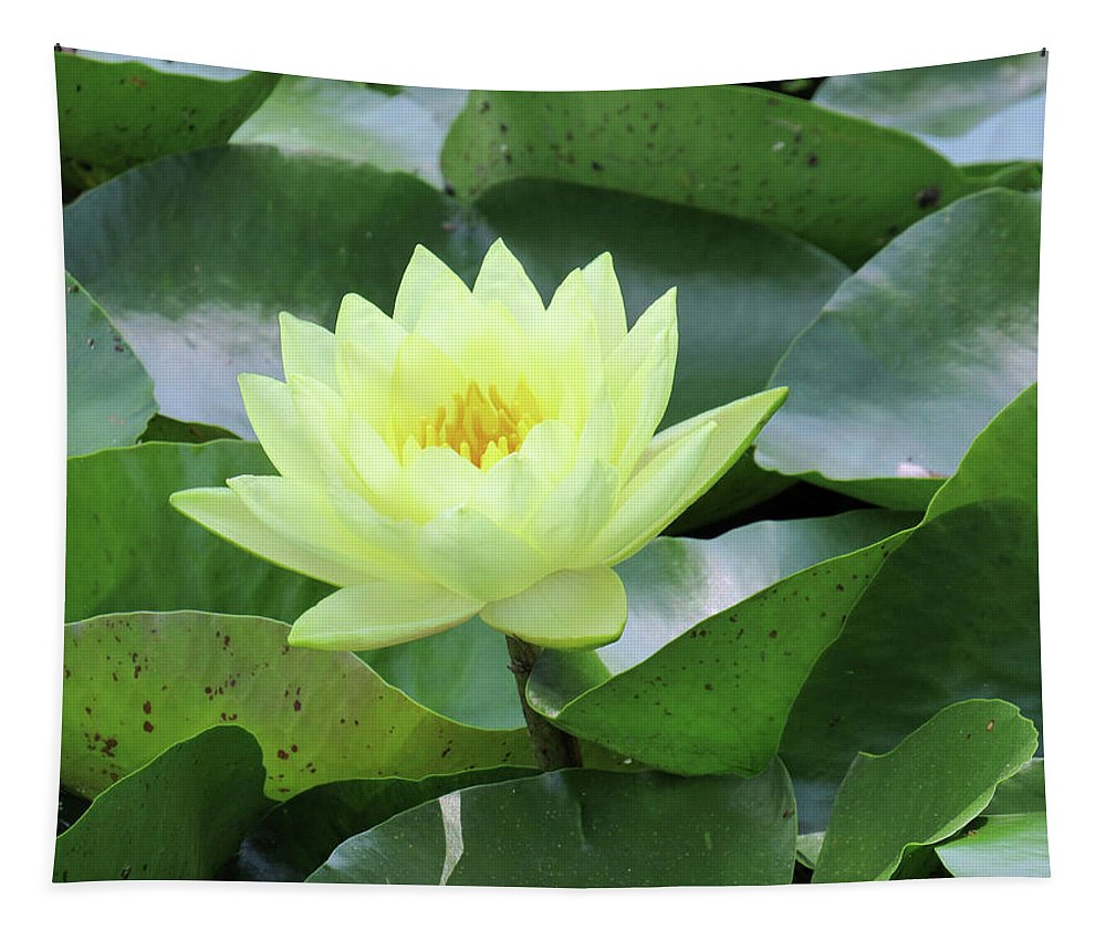 Water Lily Tapestry featuring the photograph Water Lily - Burnin' Love 14 by Pamela Critchlow