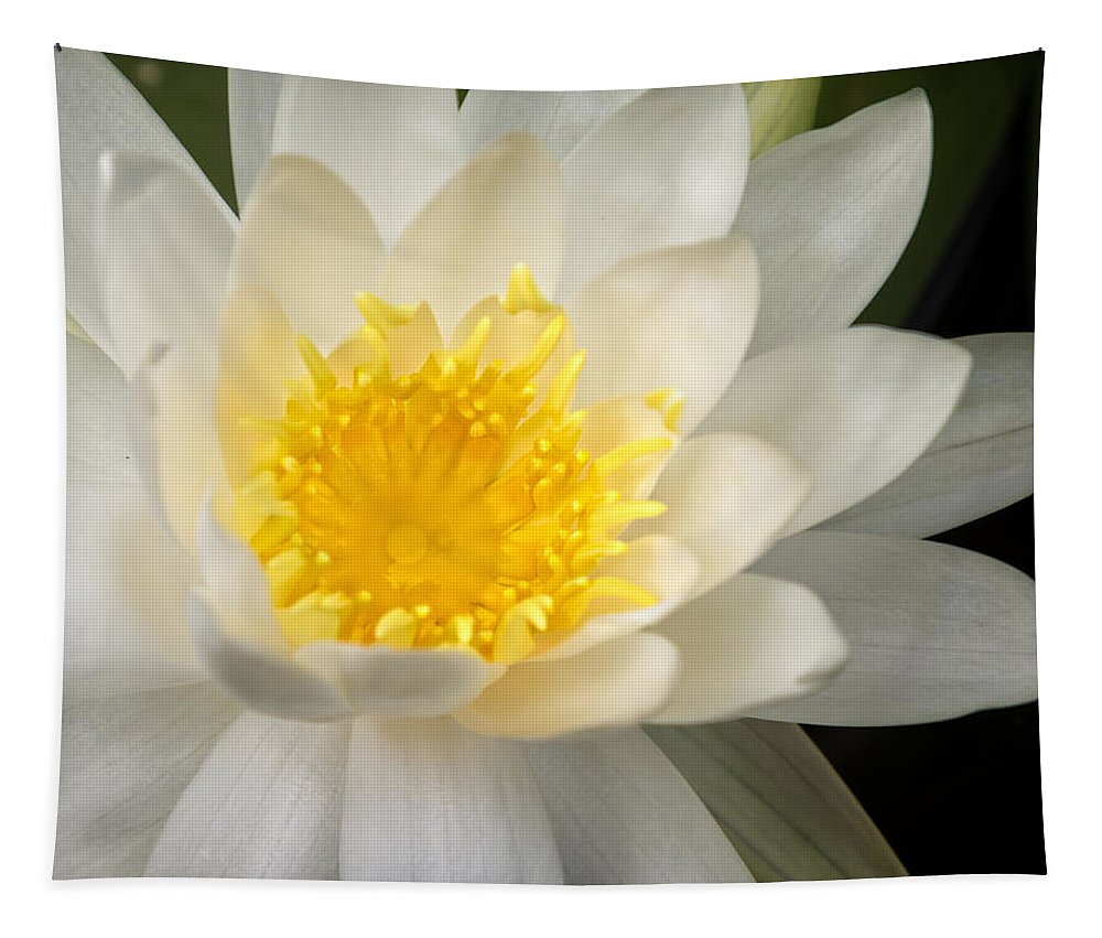 Water Tapestry featuring the photograph Water Lily II by Ricky Barnard