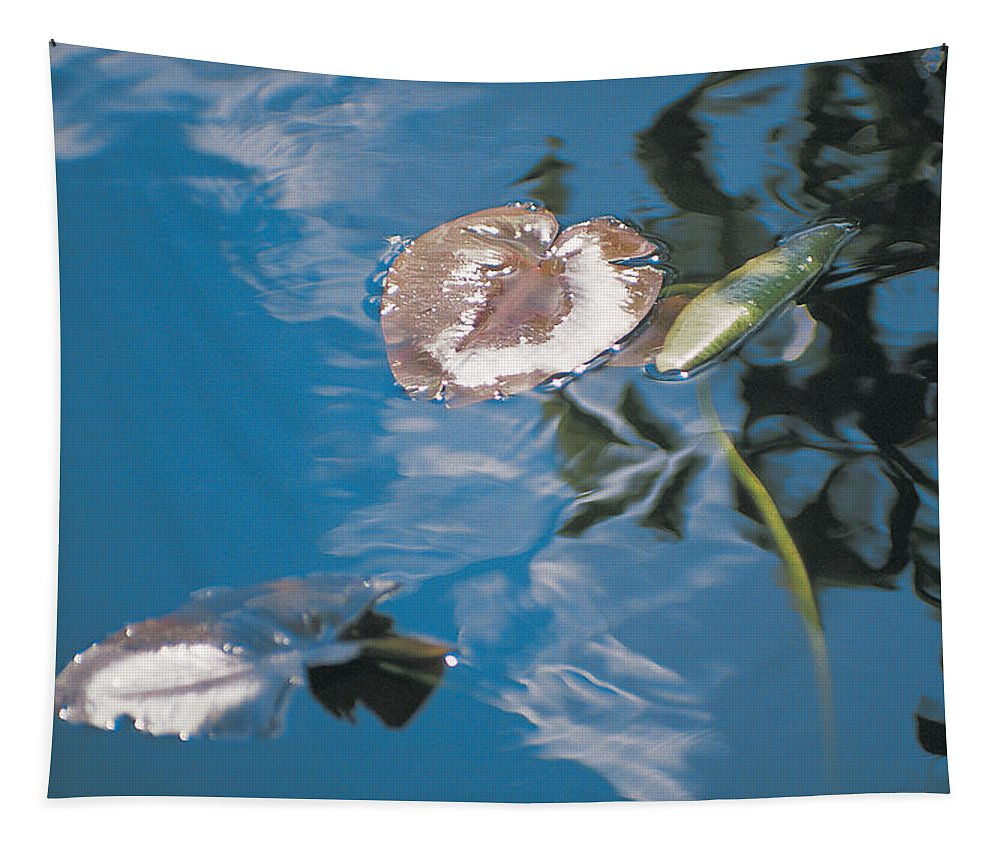 Australia Tapestry featuring the photograph Water Lily Leaves And Reflection Of Clouds In Unknown Lake by Australian School