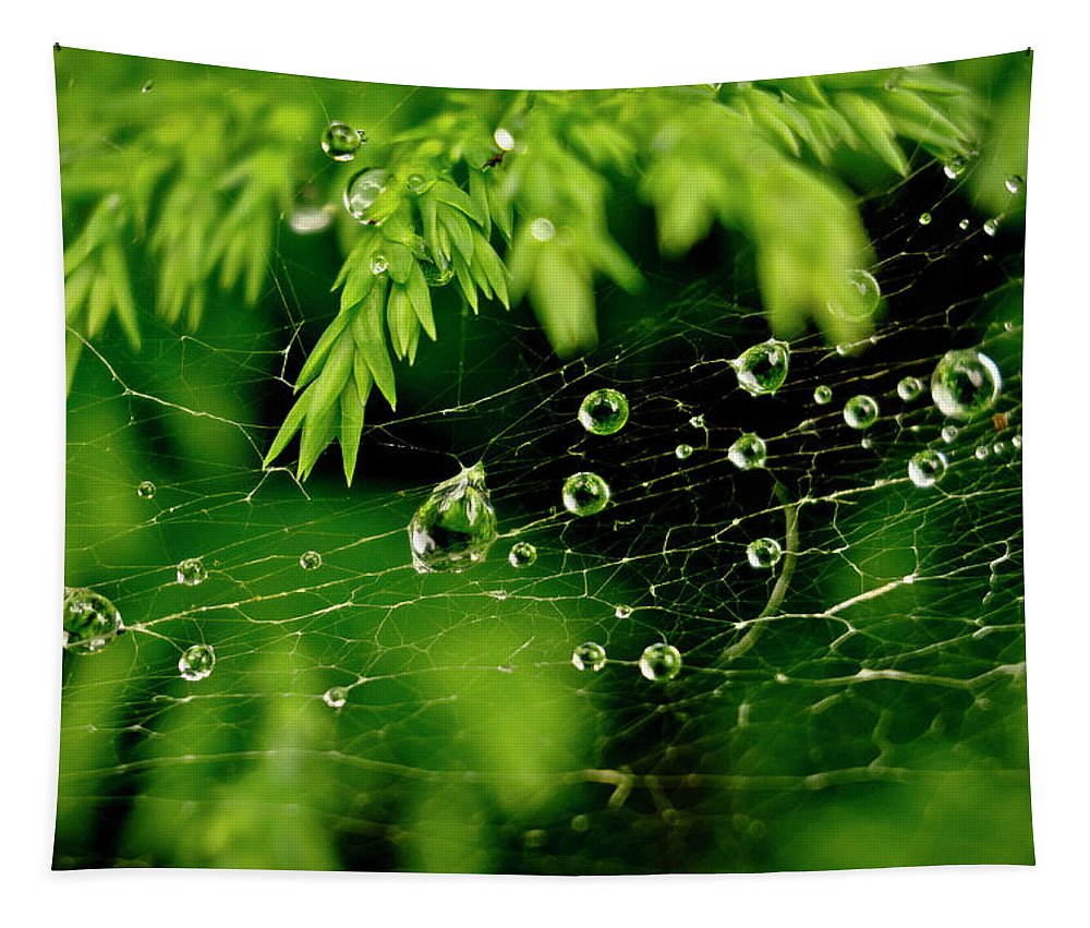 Spiders Tapestry featuring the photograph Water Orbs In Cobweb. by Elena Perelman