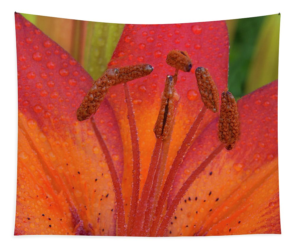 Jean Noren Tapestry featuring the photograph Watered Lily by Jean Noren