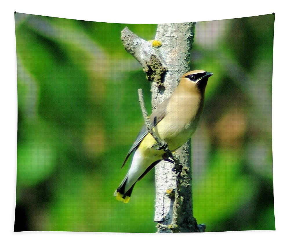 Birds. Migratory Birds Tapestry featuring the photograph Wax Wing In A Small Branch by Jeff Swan