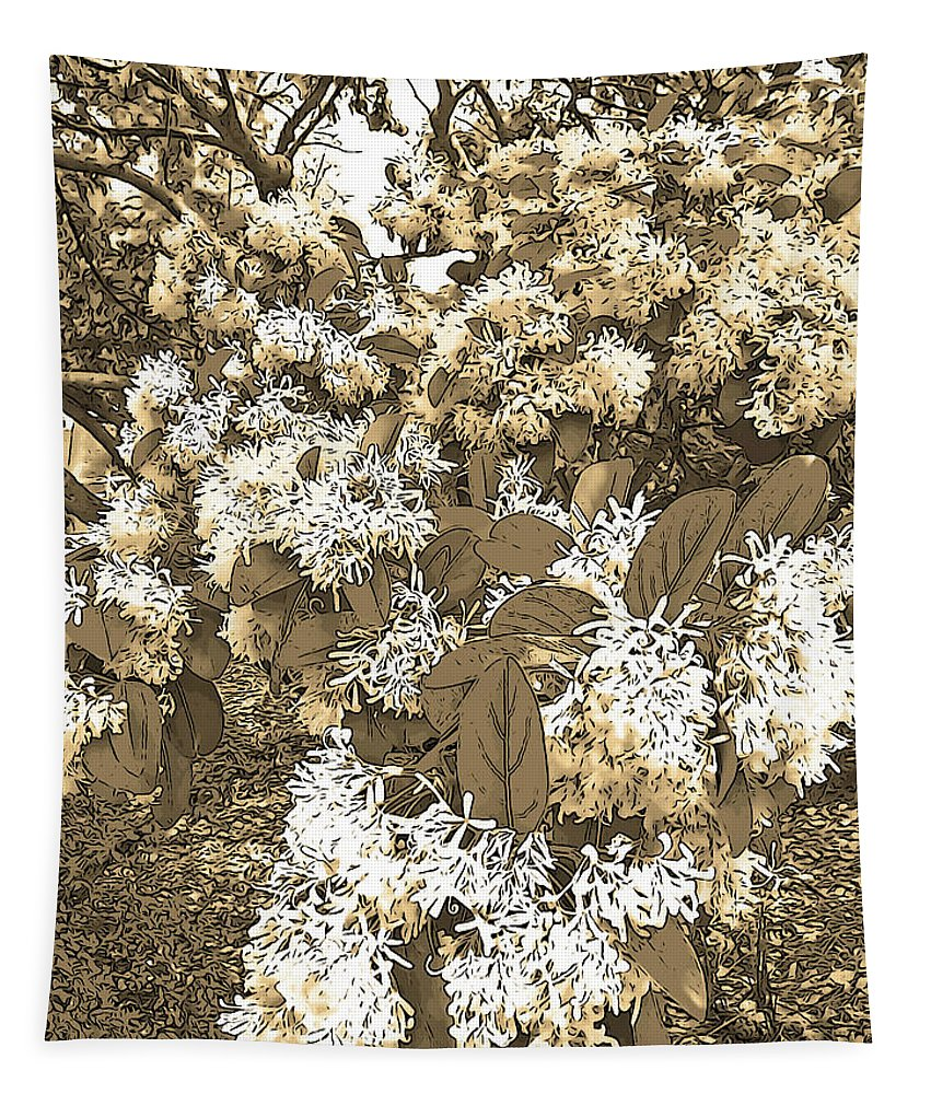 Photography Tapestry featuring the photograph Waxleaf Privet Blooms On A Sunny Day In Sepia Tones by Marian Bell