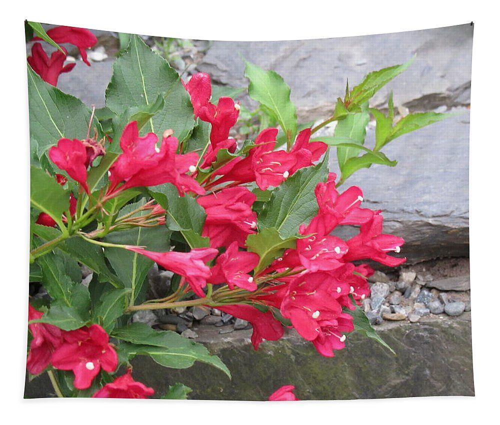 Weigela Tapestry featuring the photograph Weigela Florida Red Prince by Lyssjart Sj