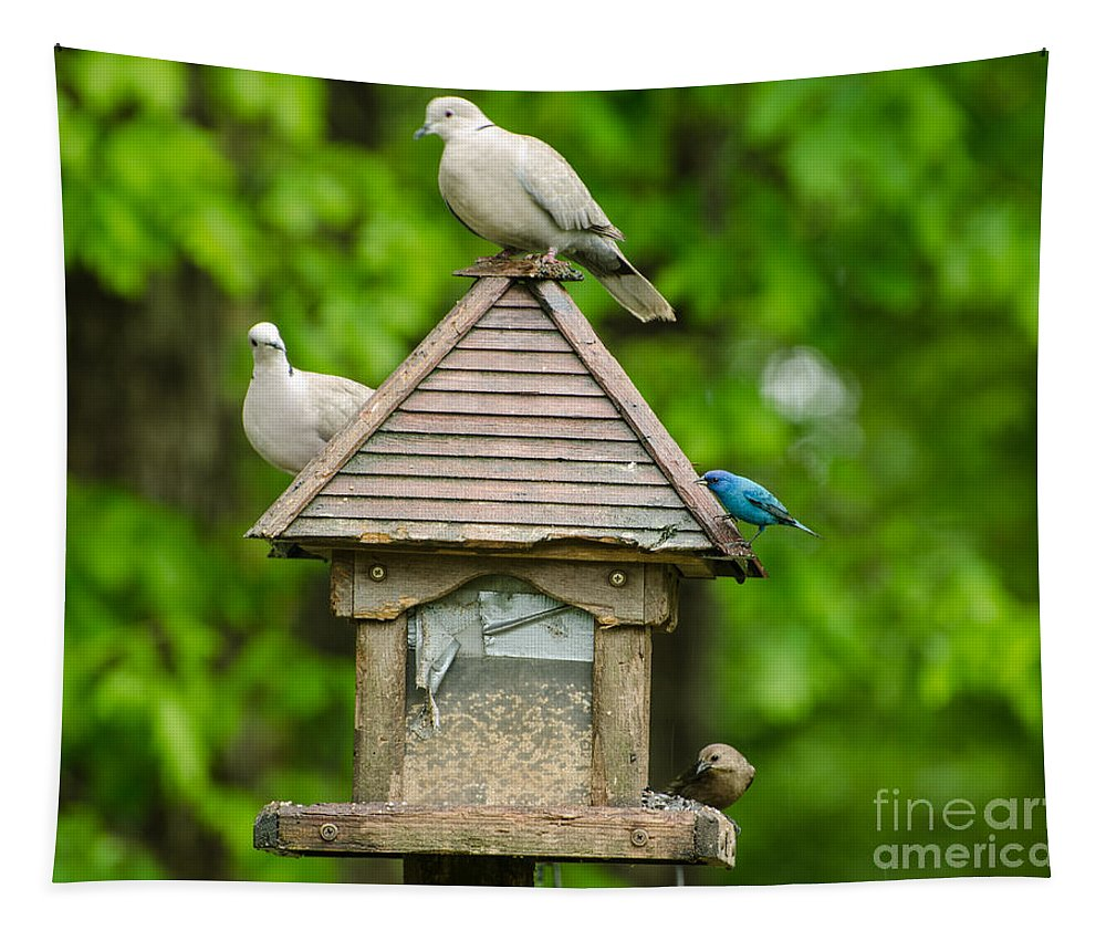 Birds Tapestry featuring the photograph Welcome To My Bird Feeder by Donna Brown