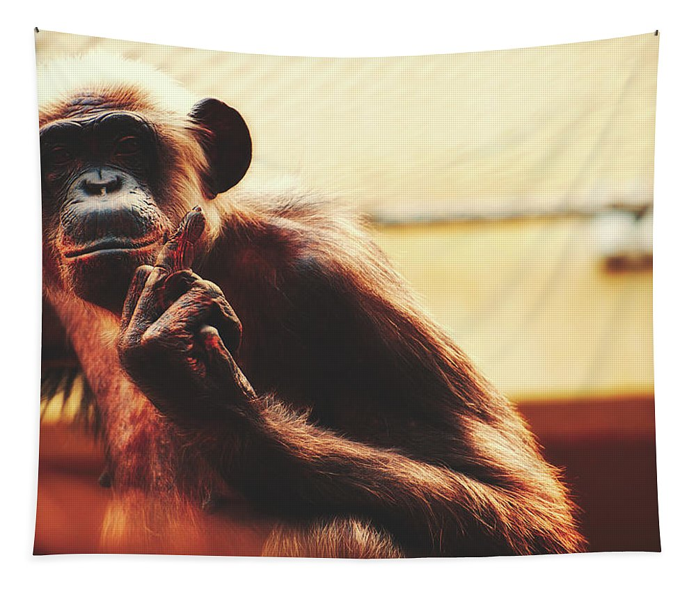 Monkey Tapestry featuring the photograph Welcome To The Zoo by Pixabay