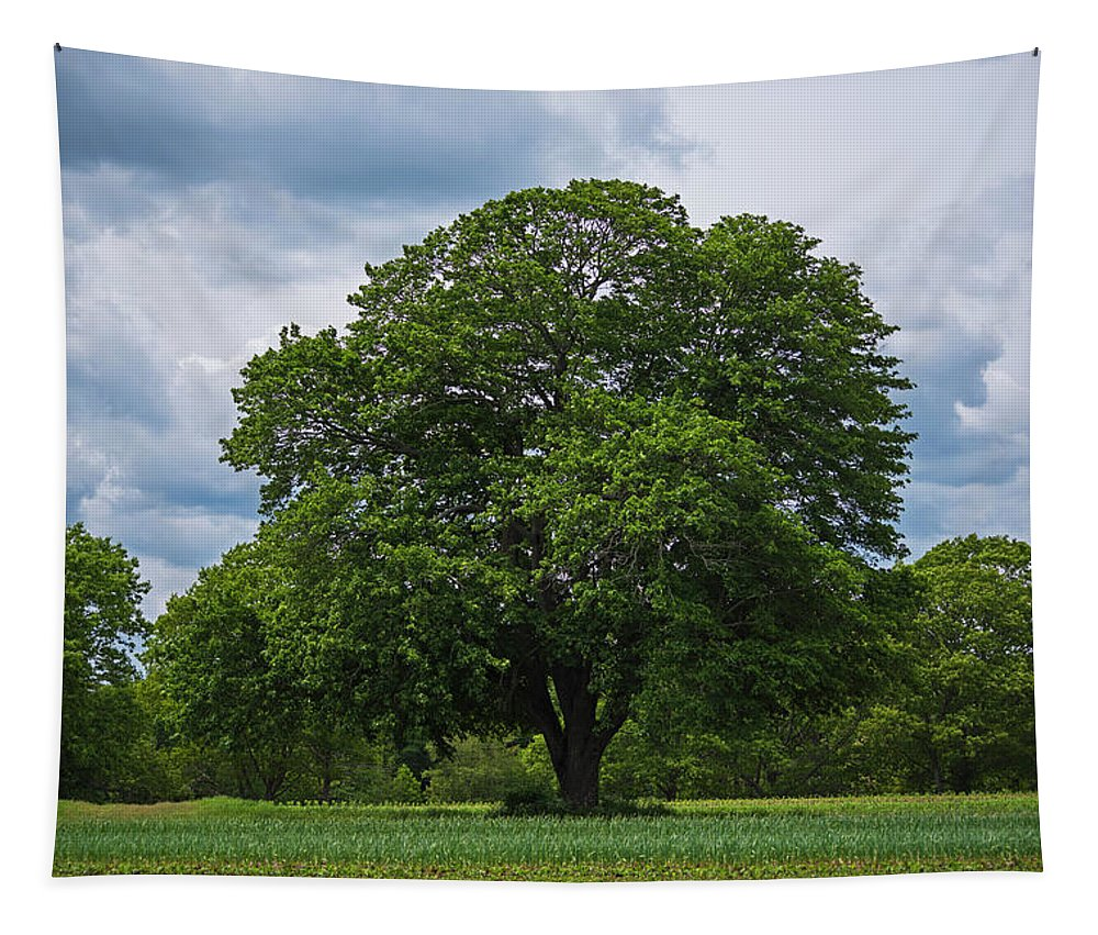 Wenham Tapestry featuring the photograph Wenham Ma Farm Tree Tender Crop Farm by Toby McGuire