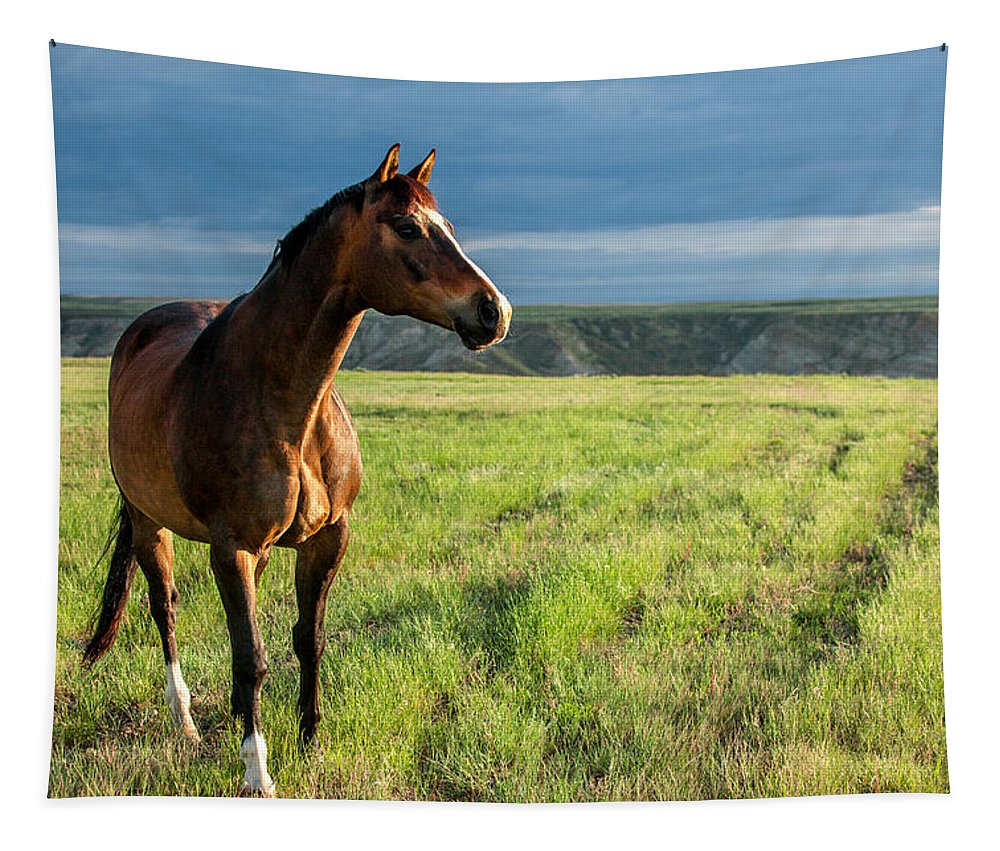 Prairie Tapestry featuring the photograph Western Stallion by Todd Klassy