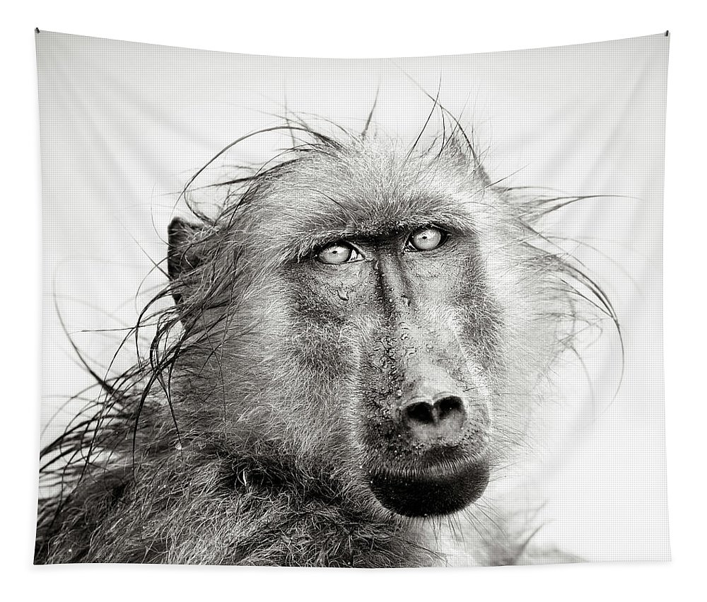 Baboon Tapestry featuring the photograph Wet Baboon Portrait by Johan Swanepoel