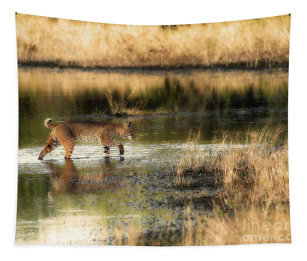 Bobcat Tapestry featuring the photograph Wet Bob Cat by Davids Digits
