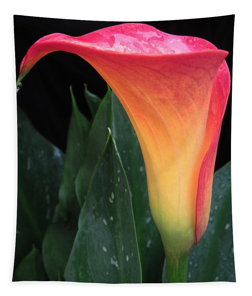 Lynne Miller Tapestry featuring the photograph Wet Calla Lily 1 by Lynne Miller