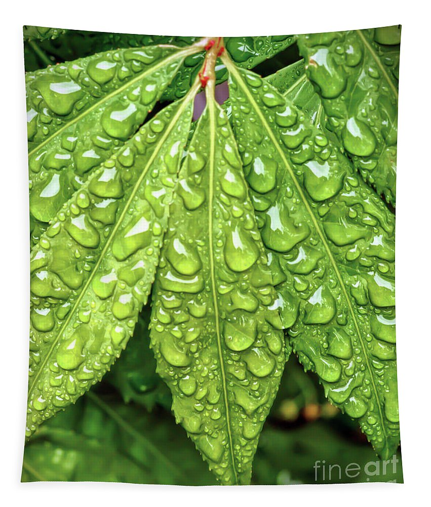 Wet Leaves Tapestry featuring the photograph Wet Leaves by Kerri Farley