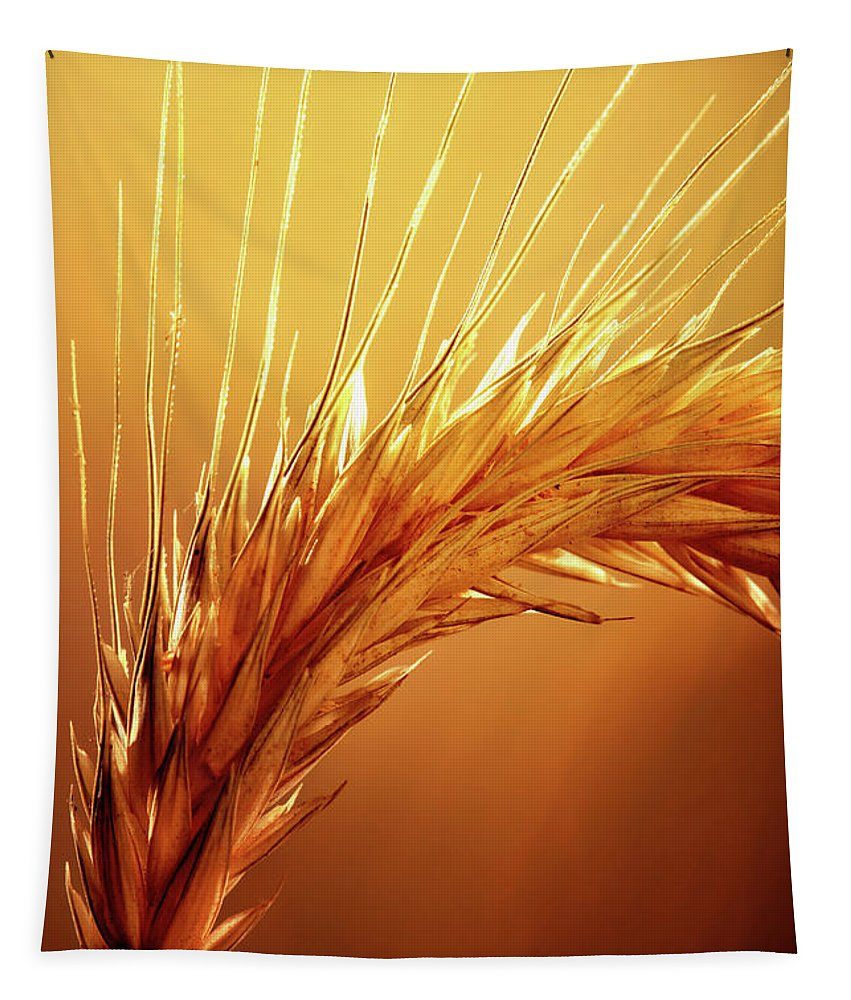 Wheat Tapestry featuring the photograph Wheat Close-up by Johan Swanepoel
