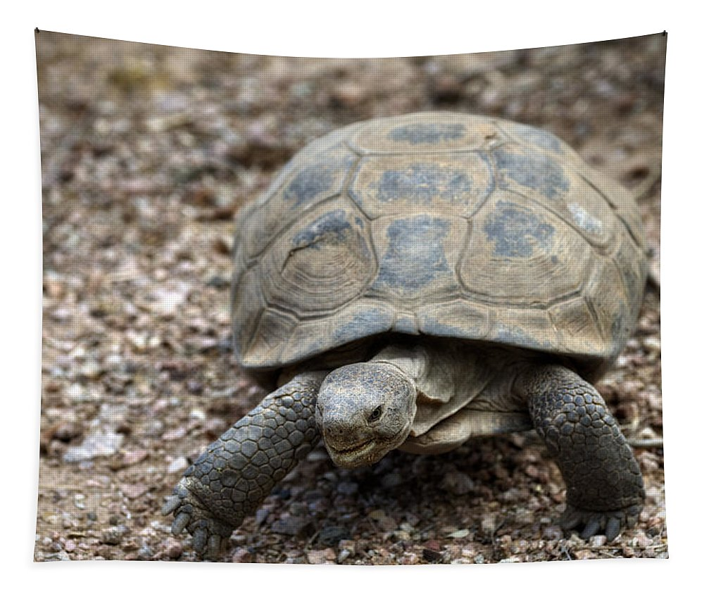Desert Tortoise Tapestry featuring the photograph When You're Smilin' by Saija Lehtonen