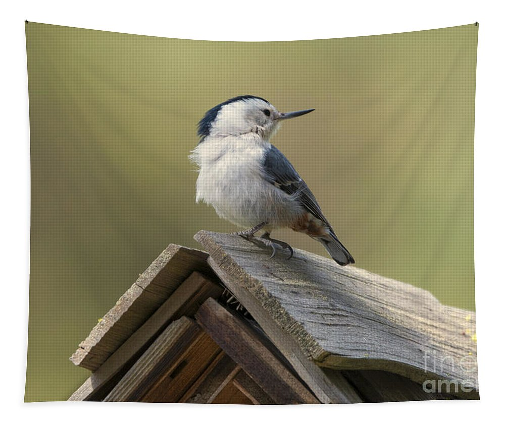 White-breasted Nuthatch Tapestry featuring the photograph White-breasted Nuthatch by Mike Dawson