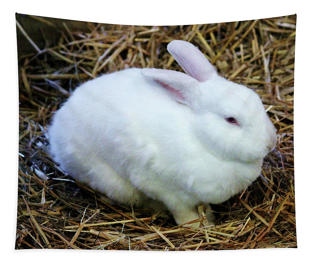 White Tapestry featuring the photograph White Bunny by Cynthia Guinn