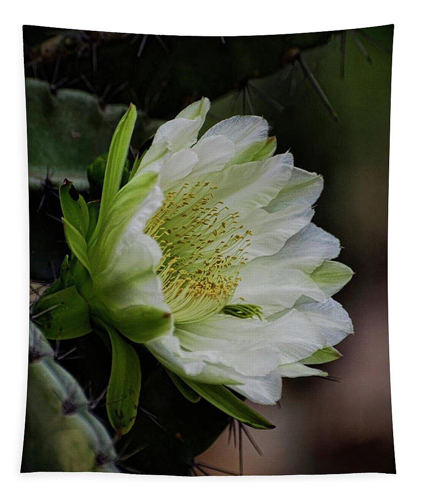 Echinopsis Tapestry featuring the photograph White Cactus Flower by Saija Lehtonen
