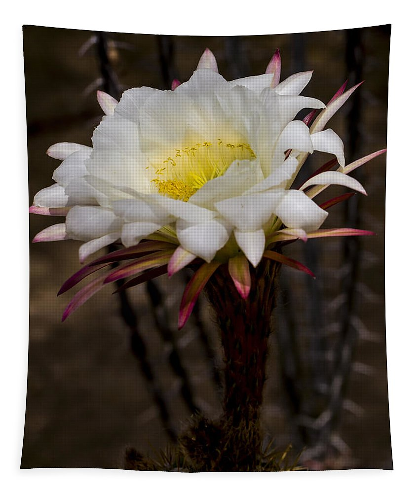 Jean Noren Tapestry featuring the photograph White Cactus Fower by Jean Noren