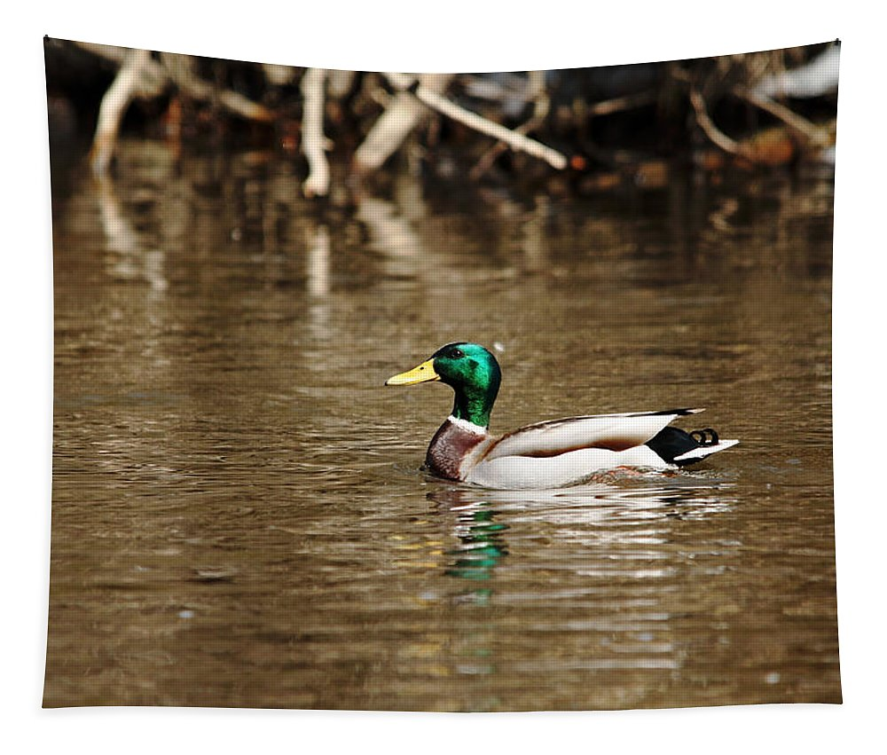 Ducks Tapestry featuring the photograph White Collar Dabbler by Debbie Oppermann