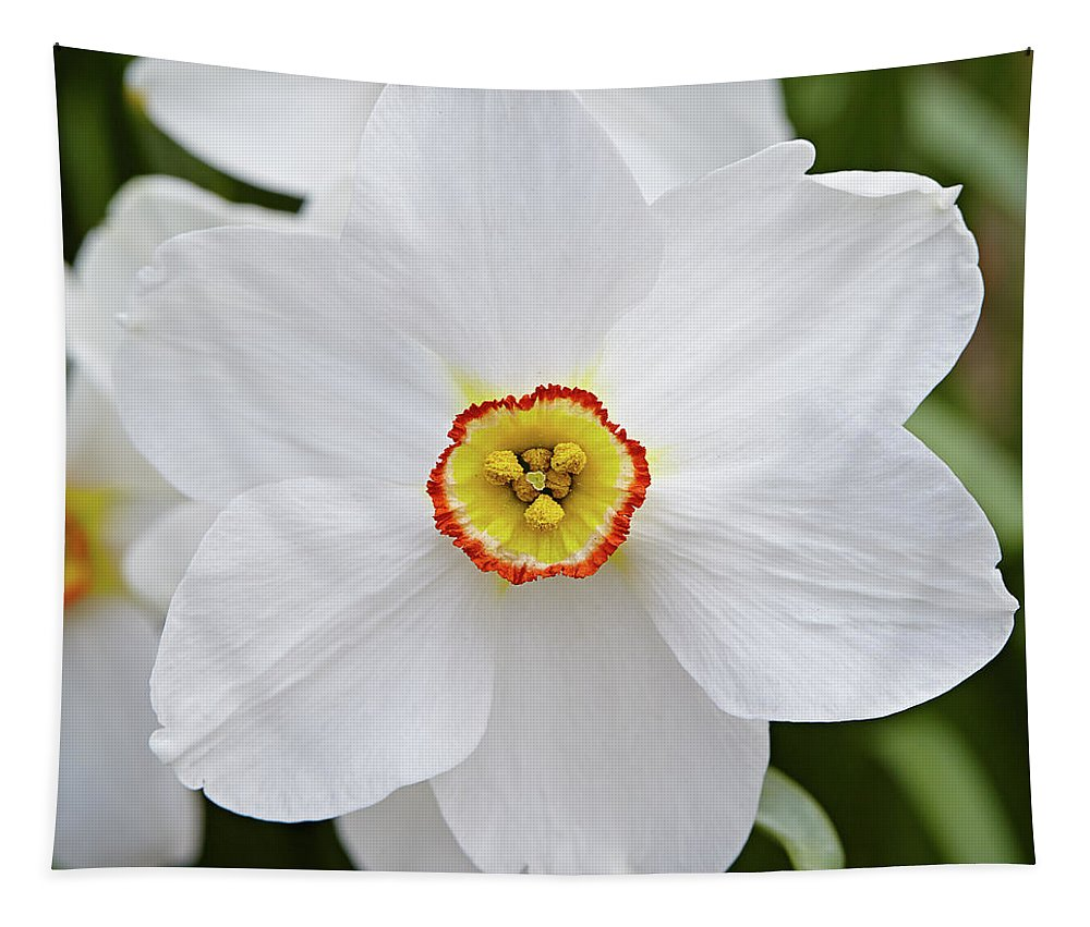 Garden Tapestry featuring the photograph White Daffodil by Garden Gate magazine